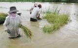 Nhiều địa phương lo ứng phó với mưa, lũ