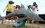 6 cá mập liên tiếp sa lưới ngư dân