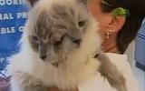 Mèo hai mặt 'thọ' nhất thế giới