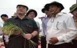 Phó Thủ tướng Hoàng Trung Hải: Không chủ quan với mưa lũ!