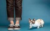 Con mèo lùn nhất