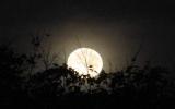 Tối 11-10 trăng tròn nhỏ nhất trong năm