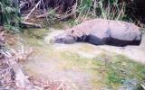 Tê giác một sừng tuyệt chủng ở Việt Nam
