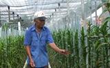 Thành công với loài lan Mokara