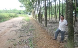 Chặt cao su, hiến đất làm đường