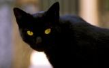 Mèo cưng được thừa kế 13 triệu đô
