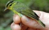 Phát hiện 208 loài sinh vật mới tại vùng sông Mê Kông