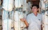 Thành công với nghề trồng nấm