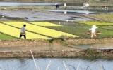 Cả nước tích cực chuẩn bị vụ gieo trồng Đông Xuân
