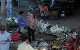 Nguy cơ cúm gia cầm H5N1 trở lại