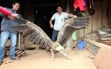 Bắt được chim cực lớn chưa từng biết tới ở Việt Nam