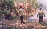 Triển khai nghiêm túc các phương án phòng cháy chữa cháy rừng