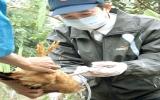 Cấp bách ngăn chặn dịch cúm gia cầm