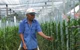 Đào tạo nghề cho lao động nông thôn: Gắn với giải quyết việc làm