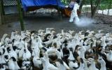 Đề xuất mua 50 triệu liều vắcxin phòng cúm H5N1