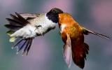 Chim cũng phụ tình khi 'thời thế' thay đổi