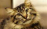 Mèo tái ngộ chủ nhân sau 16 năm mất tích