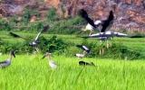 """Xuất hiện đàn chim """"lạ"""" gần Công trình thủy điện Lai Châu"""