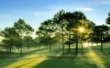 Biến đổi cây thông để tăng khả năng hấp thu cacbon