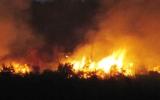 Cháy rừng Hải Vân