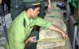 Đốn gỗ sưa ở Quảng Bình: Đã tìm thấy 1 người chết