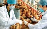 Hongkong: ca nhiễm cúm gia cầm trên người đầu tiên sau 18 tháng