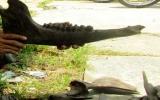 Phát hiện xương động vật lạ ở Cà Mau