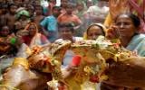 Tổ chức đám cưới truyền thống cho... ếch