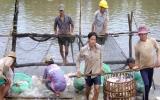Sớm tháo gỡ khó khăn cho ngành chế biến cá tra