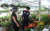 Kinh doanh hoa kiểng: Nghề đang thịnh