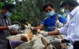 Phát hiện dịch cúm H5N1 trên gia cầm ở Quảng Bình