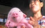Heo 2 đầu, 3 mắt xuất hiện ở Trung Quốc