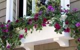 Bồn hoa dịu dàng bên ô cửa