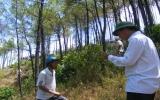 Cháy rừng thông 35 năm tuổi trên núi Ngự Bình