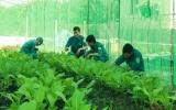 Lực lượng dân quân thường trực xã Thường Tân (Tân Uyên): Phát huy hiệu quả mô hình tăng gia sản xuất tại chỗ
