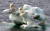 Băng ở Bắc Cực giảm xuống mức thấp kỷ lục