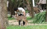 Ngựa vằn vườn thú Khu du lịch Đại Nam sinh con