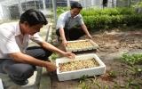 Xã Phú Chánh (Tân Uyên) tổ chức tập huấn trồng rau mầm sạch cho hội viên nông dân