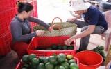 Nông nghiệp ứng dụng kỹ thuật cao: Xuất hiện nhiều mô hình hay, hiệu quả