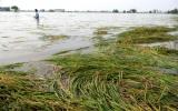 Mưa lớn gây nhiều thiệt hại tại Đồng bằng sông Cửu Long
