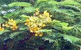Hoa về trong tay nải nhà sư
