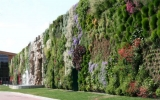 Khu vườn đứng lớn nhất thế giới