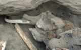 Xác voi ma mút lộ diện tại Nga