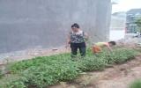 Tự trồng rau sạch để ăn