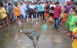 Vụ hàng trăm cá sấu sổng chuồng: Thợ săn vào cuộc