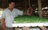 Hội nông dân TP.TDM: Hướng nông dân cách làm giàu