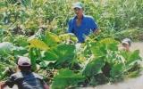 Hội Nông dân Bình Dương: Chung tay bảo vệ môi trường