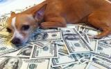 Để lại 50 tỷ đồng cho chó cưng