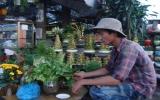 Người làng lúa vào Bình Dương trồng hoa