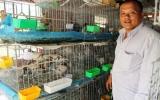 Anh Trần Minh Dũng:  Làm giàu nhờ nuôi chim bồ câu